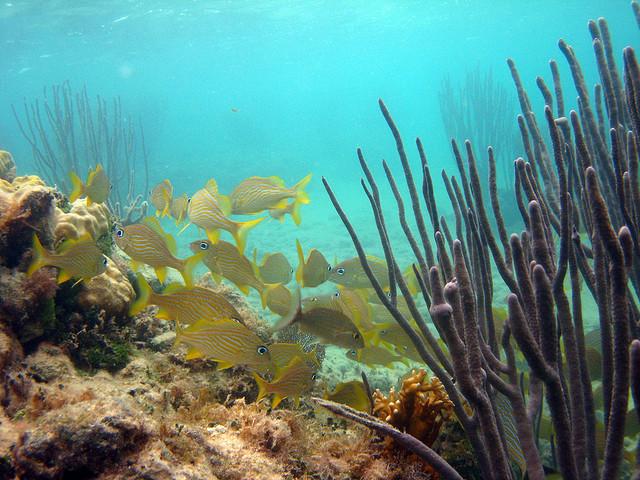 Copia de Bucear en Bermudas