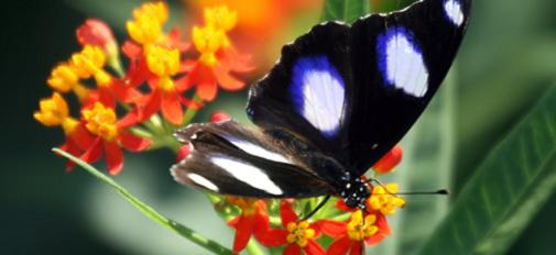 Granja de Mariposas en Costa Rica